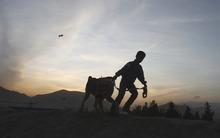 An Afghan boy walks with his dog in Naderkhan hill in Kabul, Afghanistan, Monday, Nov. 21 , 2011. (AP Photo/Ahmad Jamshid)