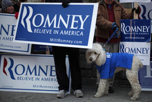Former Massachusetts Gov. Mitt Romney supporter Bill Gordon of Loudon, N.H., and his poodle Miles demonstrated before a Republican presidential debate at the Chubb Theater, Sunday, Jan. 8, 2012, in Concord, N.H. (AP Photo/Matt Rourke)