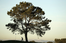 North course superintendent Jerry Dearie inspects the traps on the second hole of the north course before the second round of the Farmers Insurance Open golf tournament  Friday, Jan. 27, 2012, in San Diego. (AP Photo/Gregory Bull)