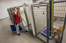 Francisco Kjolseth  |  The Salt Lake Tribune Animal care specialist Cori Hedelius cleans one of the dog pens at the Salt Lake County Animal Shelter on Thursday. Some animal advocates are asking the West Valley-Taylorsville Animal Shelter to cease use of the gas chamber and set a goal of becoming a no-kill facility. They point to the Salt Lake County Animal Shelter as an example. That shelter offers discount adoptions, works with rescue groups and has longer animal holding times.