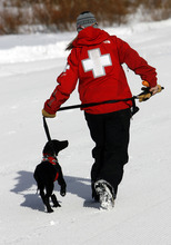 Francisco Kjolseth  |  The Salt Lake Tribune Lauren Edwards guides 4-month-old Tucker, an avalanche dog in training, for a victim search following a helicopter ride at Brighton resort on Wednesday, January 25, 2012. Local teams of highly-trained avalanche rescue dogs and their handlers gathered at Brighton to do avalanche victim search drills, beacon searches, helicopter training and classroom sessions conducted by Wasatch Backcountry Rescue (WBR).