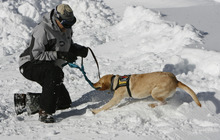 Francisco Kjolseth  |  The Salt Lake Tribune Marvin Sumner, ski patrol director at Brighton resort rewards Rio after finding a victim in a snow hole during training. Local teams of highly-trained avalanche rescue dogs and their handlers gather at Brighton at the top of Big Cottonwood Canyon on Wednesday, January 25, 2012 to do avalanche victim search drills, beacon searches, helicopter training and classroom sessions conducted by Wasatch Backcountry Rescue (WBR).