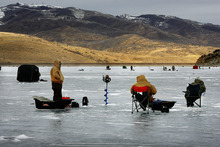 Scott Sommerdorf     The Salt Lake Tribune              People ice fish on Rockport Reservoir looking to hook one of more than 30 tagged trout swimming beneath the reservoir's ice Sunday. Lucky anglers who catch one and take it to the Rafter B store can claim prizes ranging from cash to gear.