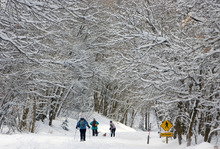Al Hartmann  |  The Salt Lake Tribune Snowshoers and cross country skiers pass beneath a tunnel of snow-covered trees in Mill Creek Canyon Thursday morning after Wednesday night's snowstorm. More snow is expected Thursday afternoon and evening.