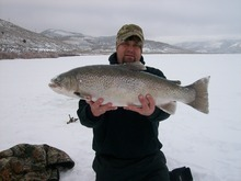 Courtesy photo  Trent Peery, of Santaquin, landed this new Utah state record tiger trout weighing just over 15 pounds on Feb. 16, 2012, at Scofield Reservoir.
