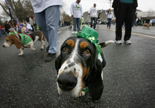 Tribune file photo The St. Patrick's Day Parade winds through The Gateway last year.