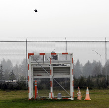 FILE- In this Friday, Jan. 16, 2009 file photo, a bird flies over a trap used to catch sparrows near a runway at the Seattle-Tacoma International Airport, during a demonstration of bird-deterrents used at the airport for journalists in Seattle. Although there is evidence that bird-control efforts near airports are paying off, U.S. Sen. Kirsten Gillibrand, D-NY, introduced legislation on Wednesday, April 25, 2012 that would make it easier to round up geese near JFK Airport and kill them, after a second airliner was forced from the skies over New York due to a bird strike. (AP Photo/Ted S. Warren)