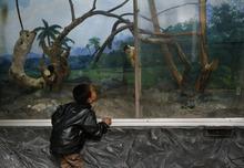 A North Korean boy watches a squirrel monkey at a zoo in Pyongyang, North Korea Thursday, April 26, 2012.  (AP Photo/Vincent Yu)