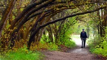 Tribune file photo A visitor walks one of the many trails in the natural section of Red Butte Garden in Salt Lake City.