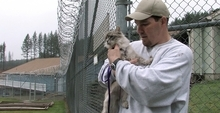 This frame grab from video shows inmate Richard Amaro with his cat Clementine at Larch Correctional Facility Friday, April 20, 2012, in Yacolt, Wash.  The Cuddly Catz program at the Larch Correctional Facility, a minimum-security prison is several months old, but inmates say they've already noticed a difference in the cats and themselves. The program began in cooperation with a local animal shelter. It has grown to include two cats and four inmates, and the prison plans to add four more cats. (AP Photo/Rick Bowmer)