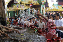 A woman pours water to Bo-tree as the followers pay a visit to Myanmar's fame Shwedagon Pagoda on the full-moon day of Kasone, the second month of Myanmar Calendar, Saturday, May 5, 2012, in Yangon, Myanmar. (AP Photo/Khin Maung Win)