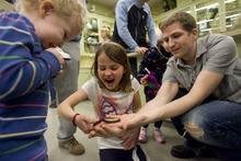 Kim Raff | The Salt Lake Tribune  (left) Afton Hogan winces as her father (right) Brady Hogan and Emma Saddler handle a desert millipede during the Bug Brigade in the Natural History Museum in Salt Lake City on Saturday. Every second and fourth Saturday of the month, the museum lets visitors observe and handle some of its live bugs during the event.