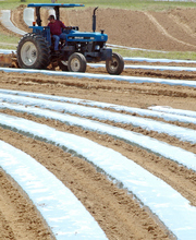 In a Thursday, May 10, 2012 photo, a farm worker prepares a tomato field for planting at K&D Farmers near Oneonta, Ala. The farm is among the operations in Alabama where farmers say they are cutting back on produce production because of labor uncertainties caused by the state's tough law on illegal immigration. (AP Photo/Jay Reeves)