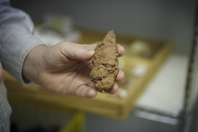 In a photo made May 15, 2012 Assistant Curator David Temple, famous for discovering fossized vegetarian dinosaur scat, shows an example of a meat eaters scat that will be on display in the new Hall of Paleontology at the Houston Museum of Natural Science. The $85 million wing of the museum will have the only Triceratops skin found to date and  a unique Tyrannosaurus Rex fossil with complete hands.(AP Photo/Michael Stravato)