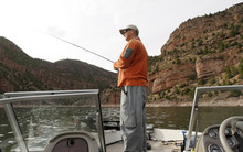 Al Hartmann  |  The Salt Lake Tribune  Ryan Kelly of Dutch John casts for trout while boating on Flaming Gorge Reservoir. Kelly landed 70 or so rainbow trout in three hours on this trip.