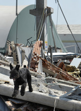 A dog walks amid debris of a collapsed factory in Mirandola, northern Italy, Tuesday, May 29, 2012. A magnitude 5.8 earthquake struck the same area of northern Italy stricken by another fatal tremor on May 20. (AP Photo/Marco Vasini)