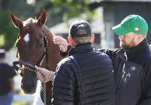 Trainer Doug O'Neill, right, gives I'll Have Another a pat on the neck after a morning workout at Belmont Park in Elmont, N.Y., Tuesday, June 5, 2012 .I'll Have Another's bid for a Triple Crown ended with the shocking news Friday that the colt was out of the Belmont Stakes because of a swollen left front tendon. (AP Photo/Mark Lennihan)