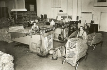 After printing and sewing, bags were turned inside out by hand-fed machines, then stacked for weighing, bunding and shipping (circa 1955). Courtesy Don Gale