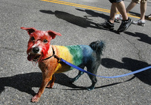 Scott Sommerdorf  |  The Salt Lake Tribune              Oscar The Rainbow Dog parades with the annual Gay Pride Parade through downtown Salt Lake City, Sunday, June 3, 2012.