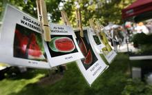 Scott Sommerdorf  |  The Salt Lake Tribune              Examples of seedlings for sale at Kenyon Organics' booth at he opening Saturday of the Salt Lake Farmer's Market, Saturday, June 9, 2012.