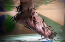 An Iraqi man immerses his feet in a fish tank with Garra rufa, also known as Doctor fish at Baghdad's first fish pedicure salon in Iraq, Sunday, June 10, 2012. The latest luxury spa in Iraq's capital offers another small sign of life creeping closer to normalcy if your definition of