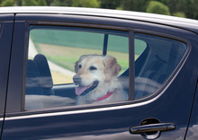 Now that temperatures are rising, it's time for a seasonal reminder never to leave pets in parked cars on hot days.