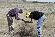 Al Hartmann  |  The Salt Lake Tribune  Utah State University professor Ted Evans, left, studies a lone Squarrose Knapweed with biology student Dallin Wright.  They were among a group of landowners and members of state and federal government agencies touring an area on the Juab-Tooele county line where the invasive weed  has gained a foothold.