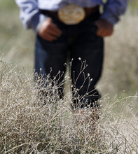Al Hartmann  |  The Salt Lake Tribune  A group of landowners and members of state and federal government agencies tour an area on the Juab-Tooele county line where Squarrose Knapweed has gained a foothold.