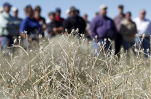 Al Hartmann  |  The Salt Lake Tribune  A group of landowners and members of state and federal government agencies tour an area on the Juab-Tooele county line where the invasive Squarrose Knapweed  has gained a foothold.