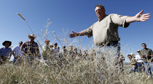 Al Hartmann  |  The Salt Lake Tribune  Rich Riding with the Utah Department of Agriculture points out a large grouping of the invasive weed Squarrose Knapweed, which has gained a foothold west of Eureka in Juab and Tooele counties.  He and other weed experts from the state and federal government led a tour of landowners in the area Thursday, June 14, where steps are being taken to get the weed under control.