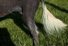 Chris Detrick  |  The Salt Lake Tribune Creature, a 10-year-old Mexican hairless mix, has a few whisps of hair. Creature will be competing for the title of World's Ugliest Dog on June 22 at the Sonoma-Marin Fair in Petaluma, Calif.  Creature recently won the title of Utah's Ugliest Mutt.