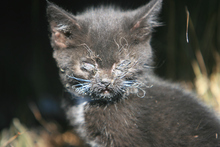 A small kitten is injured after a blaze fueled by strong winds swept through a neighborhood in Mountain Home, Idaho Tuesday, June 19, 2012. The fire, which started Monday evening, has burned 150 acres, destroyed six residences and several outbuildings. (AP Photo/The Idaho Statesman, Chris Butler)  MANDATORY CREDIT