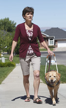AAl Hartmann  |  The Salt Lake Tribune  Becky Andrews and her  service dog Cricket weren't allowed in the Ann Taylor store at City Creek.   She has retinitis pigmantosa, a degenerative eye disease and she relies on Cricket as her set of eyes and goes with her everywhere.