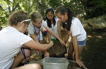Francisco Kjolseth  |  The Salt Lake Tribune Lane Brusa, Ally Dowse, Grace Bruggers and Ellie Cordova, from left, get their hands dirty as they pick macro invertebrates from a rock that was in Emigration Creek. Westminster college has been hosting an educational summer camp this week for girls entering the 8th grade. The AWE+SUM camp is designed specifically to get girls interested in math and science, with a three day run from Monday to Wednesday of this week.