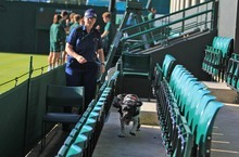 Security with sniffer dogs inspect the courts before the start of day one of the 2012 Wimbledon Championships at the All England Lawn Tennis Club, Wimbledon, London Monday June 25, 2012.   (AP Photo/Mike Egerton/PA Wire)  UNITED KINGDOM OUT NO SALES NO ARCHIVE