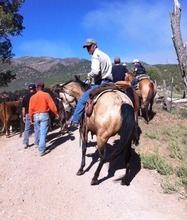 Courtesy of Carl Swenson Volunteers help herd cattle off the mountain near Birdseye in Sanpete County to escape approaching fire.