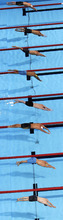 Swimmers dive at the start of a men's 50-meter freestyle semifinal at the U.S. Olympic swimming trials, Saturday, June 30, 2012, in Omaha, Neb. (AP Photo/Nati Harnik)