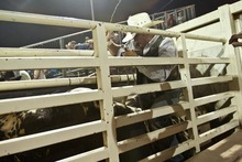 Chris Detrick  |  The Salt Lake Tribune Tag Elliott, of Thatcher, prepares to ride 30S Monty the Bull during the Dinosaur Roundup Rodeo Friday July 13, 2012. Tag Elliott was ranked 24th in the world when he was injured while attempting to ride a bull named Werewolf at the 2007 Days of '47 rodeo.