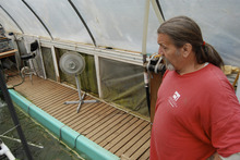 Brian Maffly | The Salt Lake Tribune Ed Stahl, an inmate at Washington State's Cedar Creek Corrections Center, looks after a tilapia growing operation, where wastewater is cycled through a hydroponic vegetable garden. The experiment, conducted under Washington's Sustainability in Prisons project, not only decontaminates water, but produces peppers and tomatoes for the prison kitchen.