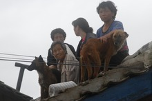 Residents wait on the roof of a flooded building in Anju City, South Phyongan Province, North Korea Monday, July 30, 2012. More heavy rain has pounded North Korea, flooding buildings and farmland and forcing stranded people and their livestock to take shelters atop rooftops. (AP Photo/Kim Kwang Hyon)