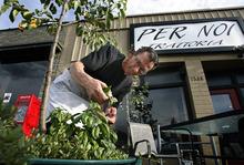 Scott Sommerdorf  |  The Salt Lake Tribune              Owner of Per Noi Trattoria, Francesco Montino cuts some fresh basil for a caprese salad, Friday, July 20, 2012.