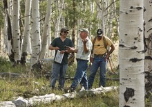 Leah Hogsten  |  The Salt Lake Tribune A team of environmentalists, government officials and ranchers are working to come up with solutions to problems with the health of the aspen stands on Monroe Mountain. (Left to right) Kevin Mueller, program director of the Utah Environmental Congress, Stanley Kitchen, a botanist with the U.S. Forest Service and Tom Tippets, grazing improvement coordinator with the Utah Department of Agriculture and Food share a laugh while walking through a stand in the area of Upper Box Creek Reservoir.