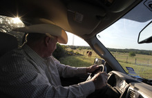 LM Otero  |  The Associated Press Cattle rancher Ron Gill slowly drives his truck pushing along a calf to reunite with its mother after the youngster wandered away through a broken pasture fence in rural Parker County near Springtown, Texas, earlier this month. Gill has been cross breeding cattle with more drought tolerant breeds that can withstand heat and droughts better. Cattle are being bred with genes from their African cousins who are accustomed to hot weather. New corn varieties are emerging with larger roots for gathering water in a drought. Someday, the plants may even be able to