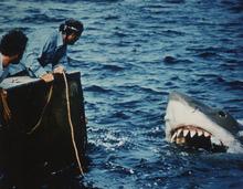 Richard Dreyfuss and Robert Shaw, battle a man-eating shark in the classic 1975 blockbuster,
