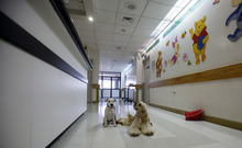 In this July 25, 2012 photo, Juci, left, and Lancelot wait in the hallway before visiting young patients at the SOLCA hospital in Quito, Ecuador. The dogs' owner says the animals are used every Wednesday to cheer up the most discouraged of the patients. Hospital workers began to notice that on Wednesdays fewer children had to be kept over because of problems after chemotherapy. Doctors found that youngsters' adrenaline levels rose from being with the dogs, boosting their resistance to chemo's side effects. (AP Photo/Dolores Ochoa)