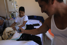 In this July 25, 2012 photo, Reny Lopez plays with Lancelot, an American cocker spaniel, on his bed at the SOLCA hospital as his father Luis takes a cell phone photo of them in Quito, Ecuador.  Reny is from Ecuador's Amazon region and is at the hospital to have a tumor removed.  The dog's owner says her dogs are used every Wednesday to cheer up the most discouraged of the patients. Hospital workers began to notice that on Wednesdays fewer children had to be kept over because of problems after chemotherapy. Doctors found that youngsters' adrenaline levels rose from being with the dogs, boosting their resistance to chemo's side effects. (AP Photo/Dolores Ochoa)