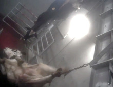 This still image made from video provided by Compassion Over Killing, appears to show workers at a Central California slaughterhouse bungling the slaughter of cows. Federal regulators shut down the slaughterhouse Tuesday, Aug. 21, 2012, after receiving the animal welfare video, and are investigating whether beef from sick cows reached the human food supply. (AP Photo/Compassion Over Killing)