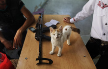 In this Friday, Aug. 24, 2012 photo, a kitten being raised by a Free Syrian Army soldier, stands on a table inside a makeshift prison run by rebels in a former elementary school in Al-Bab on the outskirts of Aleppo, Syria. Many improvised detention centers have sprung up as rebels wrest cities from army control, but these facilities fall under no national or regional authority, causing concern among rights groups. (AP Photo/Muhammed Muheisen)