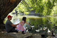 Al Hartmann  |  The Salt Lake Tribune Ryan Mahoney and his daughter Reagan, 4, all dressed up find a cool spot along the Provo River near Utah Lake to feed ducks breadcrumbs.  It's a regular activity and they've come to know many of the ducks on sight.