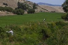 Chris Detrick  |  The Salt Lake Tribune Chris Haas, brewmaster at Desert Edge Pub, Colby Frazier and Brad Ledbetter hunt for wild hops in Summit County on Aug. 14, 2012.